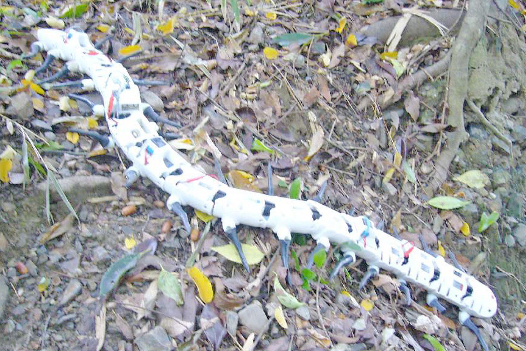 雑木林を動きまわるロボット(提供=大須賀公一教授)