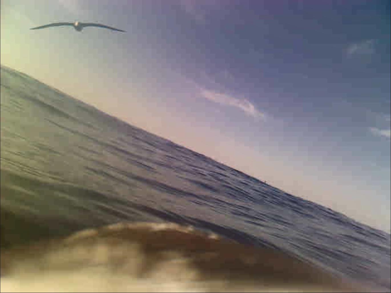 海鳥に装着したカメラで撮影した。仲間の鳥も写っている(提供写真)