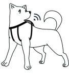 【3・4月号掲載】心拍でストレス判定 犬で初の手法確立